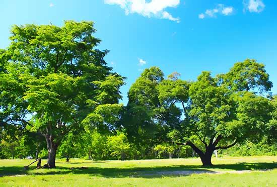 strategic tree management