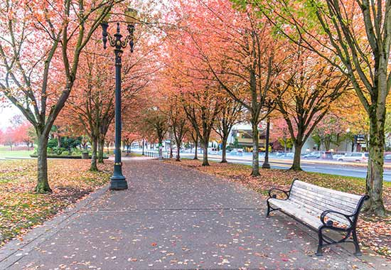 colourful avenue of trees