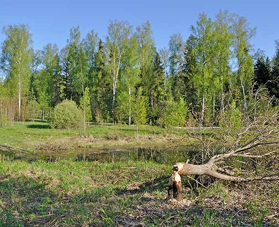 about arboriculture