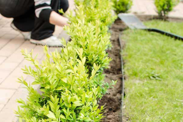 Choosing A Tree For Your Garden Things To Consider Before Planting