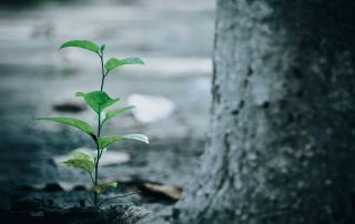 Tree planting: young tree